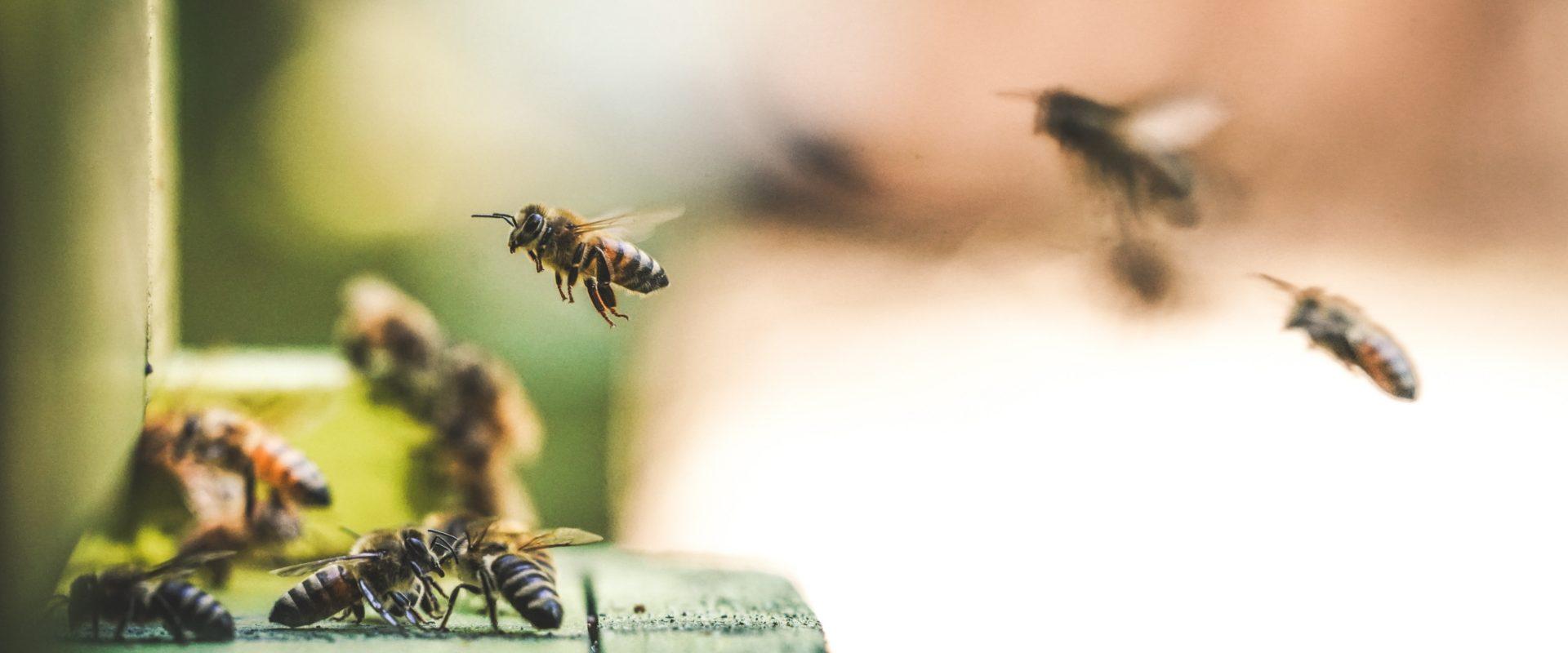 1920x1080 Honigbiene allgemein